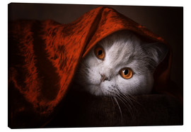 Canvas print  Little Red Riding Hood? British short-haired cat under red blanket - Janina Bürger