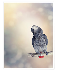 Premium poster  African Grey on a branch
