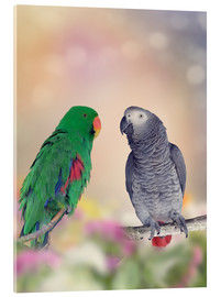 Acrylic print  Graupapagei and precious parrot on branches
