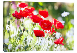 Canvas print  Red poppies on a sunny day