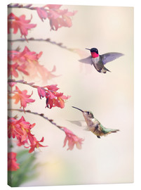 Canvas  Hummingbirds and flowers
