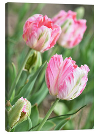 Canvas print  Pink tulips