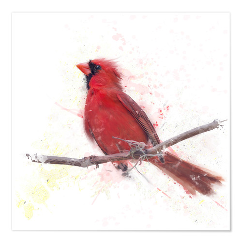 Premium poster Male Northern Cardinal