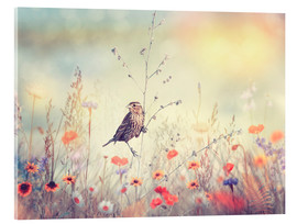 Acrylic print  Field with wild flowers