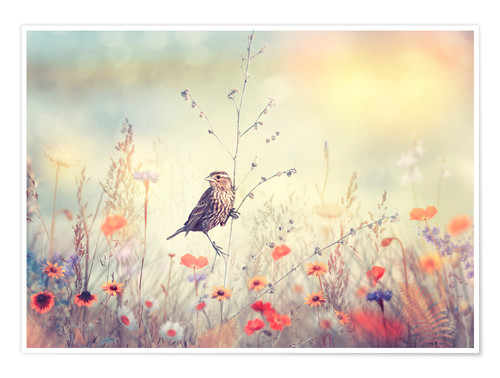 Premium poster Field with wild flowers