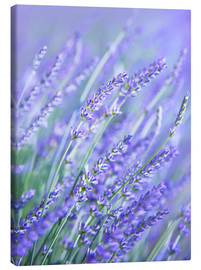 Canvas print  Purple Lavender