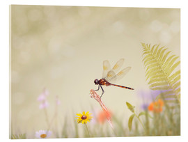 Acrylic print  Liebelle on colorful meadow