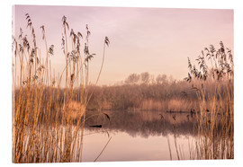 Acrylic print  Pastel colored lake