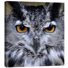Canvas print  Great Horned Owl