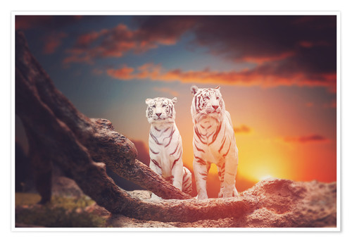 Premium poster Two white tigers