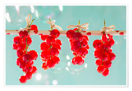 Premium poster Red currants full