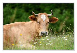 Premium poster Alpine cow on pasture