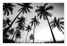 Premium poster  Silhouettes of palm trees