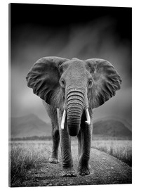 Acrylic print  Elephant on black background