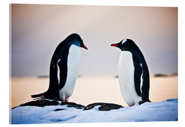 Acrylic print  Two identical penguins