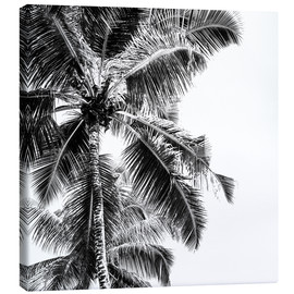 Canvas print  High palms on a tropical beach