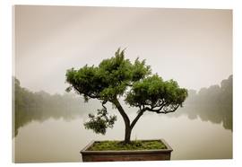 Acrylic print  Japanese bonsai in zen garden