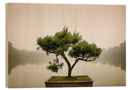 Wood print  Japanese bonsai in zen garden