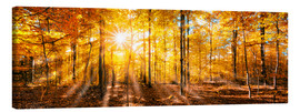 Canvas  Autumnal forest panorama in sunlight - Jan Christopher Becke