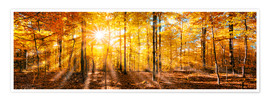Premium poster  Autumnal forest panorama in sunlight - Jan Christopher Becke