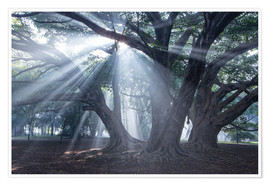 Premium poster Light rays at sunrise in a forest