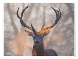 Premium poster Stag breath at sunrise, Richmond park