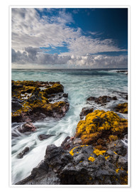 Premium poster  Yellow Seaweed at the Coast of Big Island, Hawaii - Markus Ulrich