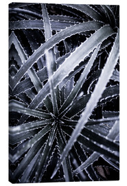 Canvas  Cactus 3 - Mareike Böhmer Photography