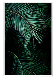 Premium poster  Palm leaves 9 - Mareike Böhmer Photography