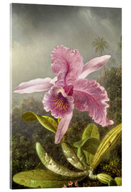 Acrylic print  Hummingbird and orchid (detail) - Martin Johnson Heade
