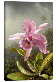 Canvas print  Hummingbird and orchid (detail) - Martin Johnson Heade