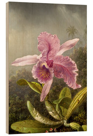 Wood  Hummingbird and orchid (detail) - Martin Johnson Heade