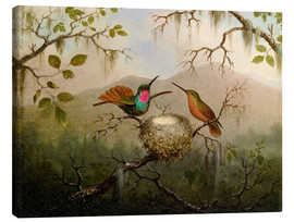 Canvas  Two hummingbirds at their nest - Martin Johnson Heade
