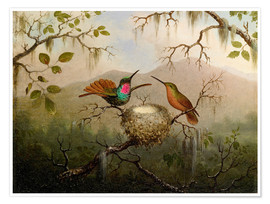 Premium poster  Two hummingbirds at their nest - Martin Johnson Heade