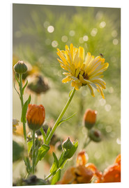 Foam board print  Yellow and orange flowers in the morning - Edith Albuschat
