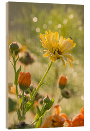 Wood print  Yellow and orange flowers in the morning - Edith Albuschat