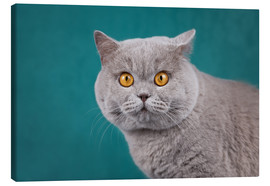 Canvas print  Imposing British short-haired cat - Janina Bürger