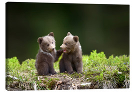 Canvas print  Two young brown bears