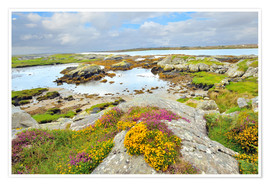 Premium poster  Ireland Landscape with wild flowers
