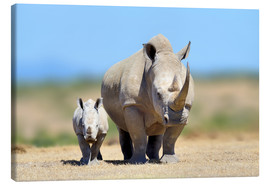 Canvas print  White rhinoceros with young in Kenya, Africa
