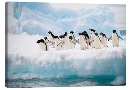 Canvas print  Adelie penguins on ice