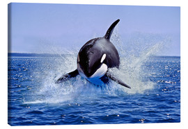 Canvas  Jump of the orca - Gérard Lacz