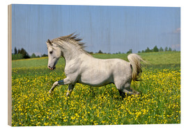 Wood  Galloping Arab stallion - imageBROKER