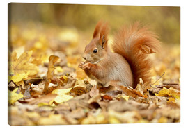 Canvas print  Red Squirrel in an urban park in autumn