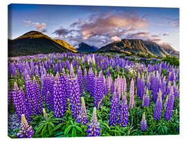 Canvas print  Lupines at Arthur's Pas