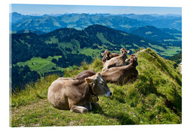 Acrylic print  Cattle near Oberstaufen in the Allgäu - Katja Kreder
