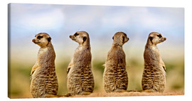 Canvas print  Four meerkats - four thoughts - Gérard Lacz