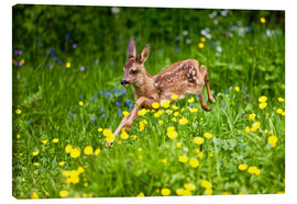 Canvas print  Roe Deer fawn running in flower meadow, Normandy - Gérard Lacz