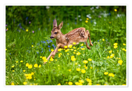 Premium poster Roe Deer fawn running in flower meadow, Normandy