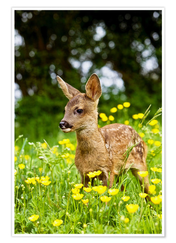 Premium poster Roe Deer fawn in flower meadow, Normandy